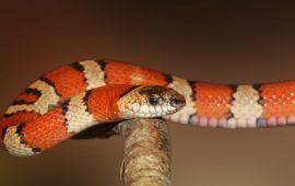 ¿Cómo cuidar a una serpiente durante la muda de piel?