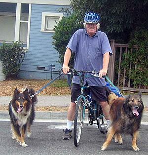 Los perros y las personas mayores – una relación más allá del tiempo