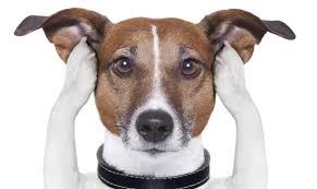 Miedo a los petardos. Cómo ayudar a nuestras mascotas.