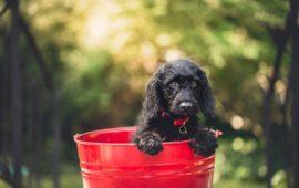 Terapia con champú en perros y gatos