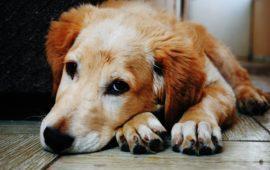 ¿Canguro o residencia para tu perro? ¿Qué es mejor?