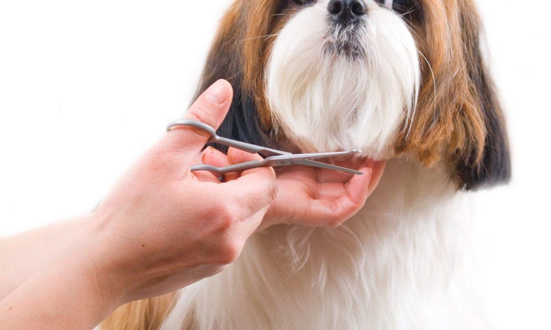 ¿Hay que cortar el pelo de perros y gatos en verano?