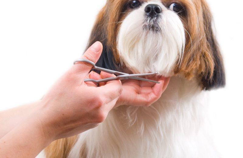 Perro en peluquería