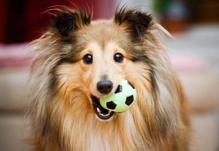 ¿Por qué los perros adoran unos juguetes e ignoran otros?