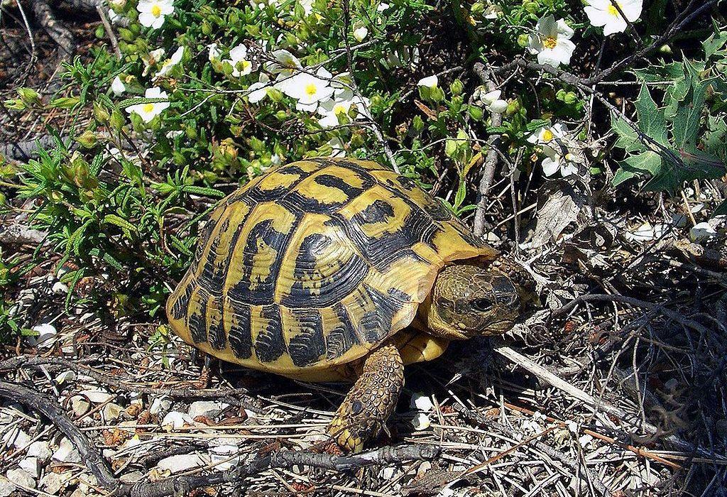 ¿Cómo cuidar el caparazón de una tortuga de tierra?