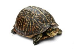 Cuidados de Tortugas Caja