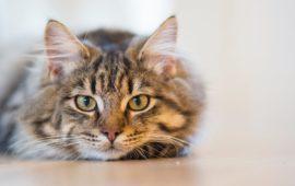 Cómo consentir a tu gato de la mejor manera