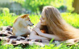 ¿Cómo evitar la leishmaniosis en perros?