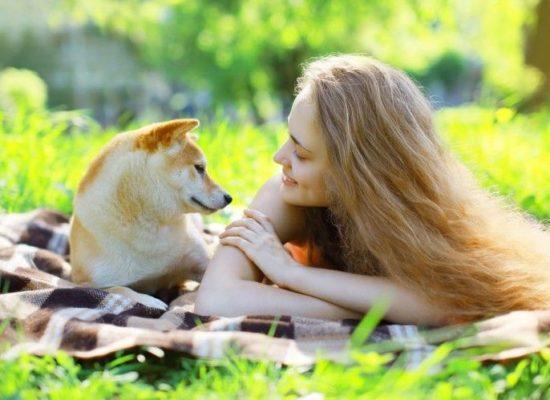 Perros leishmaniosis