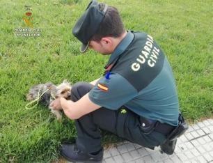 La Fiscalía pide llevar a perreras o a ONG los animales maltratados, que no podrán ser sacrificados sin autorización.