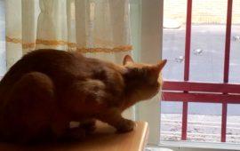 El gato en semilibertad y como minimizar riesgos.