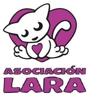 Asociación Lara – Especialistas en gatos