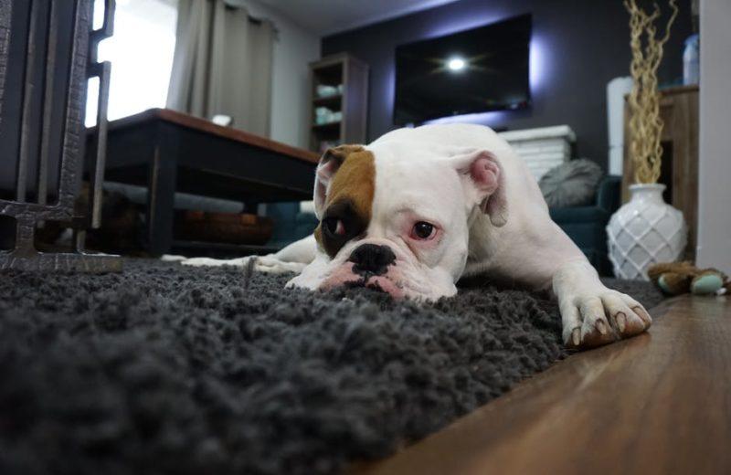 ¿Tu perro sufre ansiedad posvacacional? Consejos para reducirla.