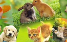Mascotas y exóticos, ¿moda antes que responsabilidad?