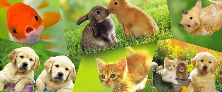 Diferentes especies
