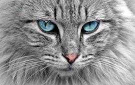 Tipos de personalidad en el gato
