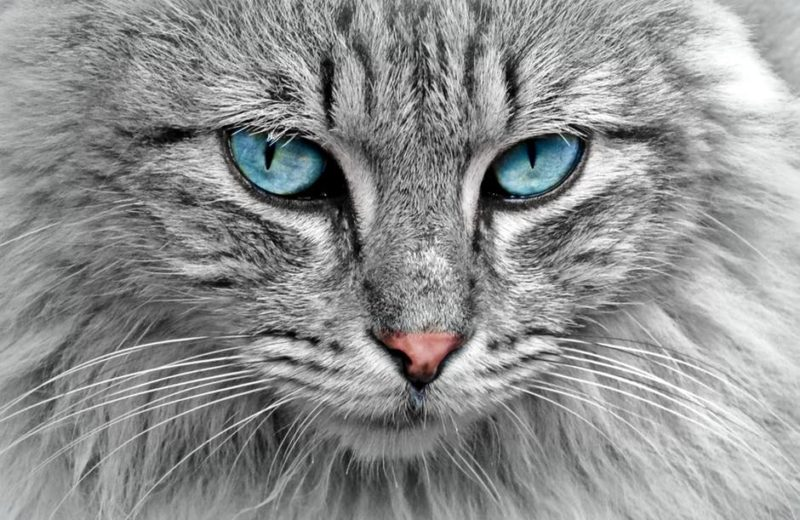 Personalidad gatos