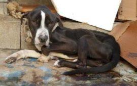 La Guardia Civil investiga a 50 personas por maltrato y abandono animal interviniendo 316 animales