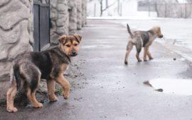 Partidos animalistas de todo el mundo se reunirán este fin de semana en España para analizar el abandono de animales