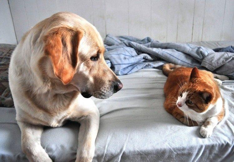 Perros y gatos que no dan alergia