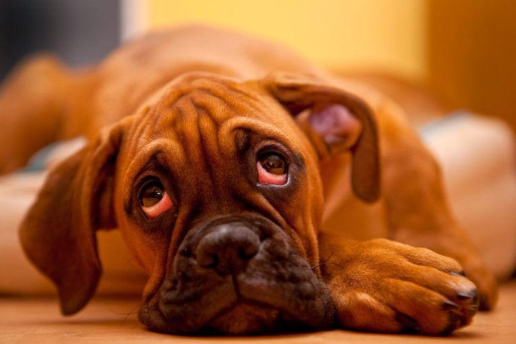 Perros miedo soledad