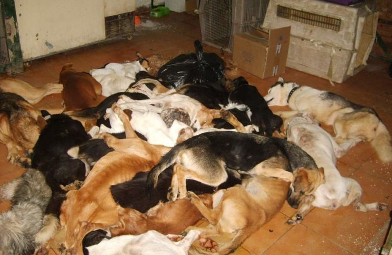 Perros muertos