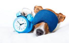 Los perros saben la hora por su nariz