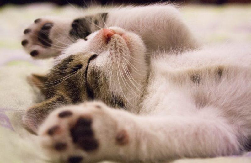 Uñas de gato