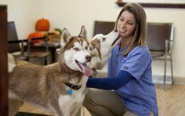 ¿En qué consiste el trabajo del Asistente Técnico Veterinario?