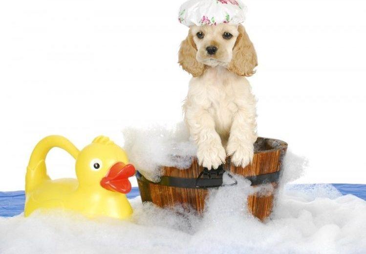 ¿Con qué edad se puede bañar a un perro?