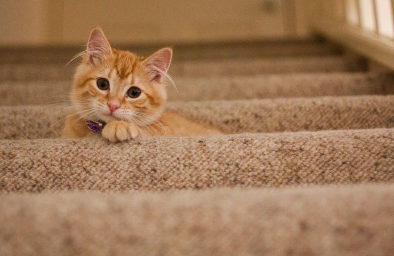 ¿Cómo hacer un rascador para gatos con cartón?