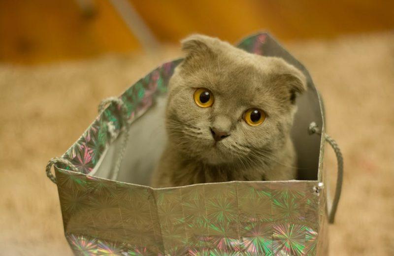 Cinco refugios hechos en casa para gatos