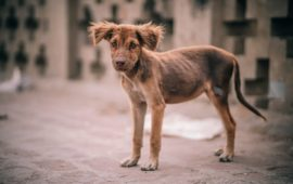 """En febrero entrará en vigor en España el """"Convenio Europeo de Protección Animal"""""""