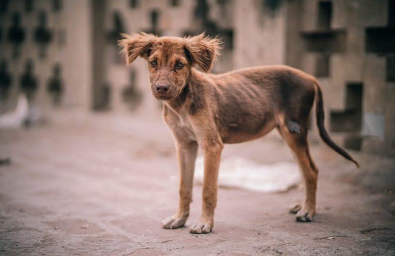 En febrero entrará en vigor en España el «Convenio Europeo de Protección Animal»