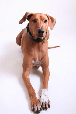 Uñas de perros
