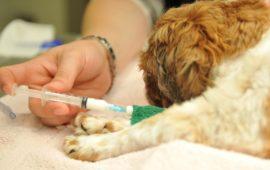 La asesina de 2.183 animales alega problemas psiquiátricos para no ir a prisión