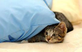 Proteger al gato de los petardos y fuegos artificiales