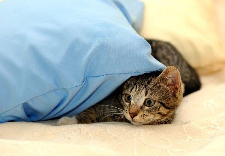 Gatos miedo a los petardos