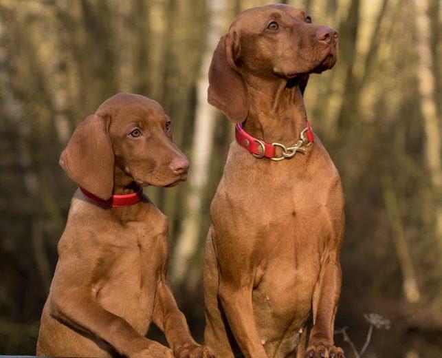 Lenguaje gestual en los perros