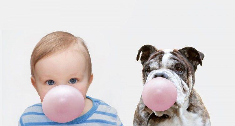 ¿Los perros pueden envenenarse con caramelos y chicles sin azúcar?
