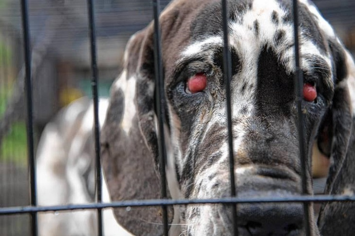 El Consejo General de Colegios Veterinarios crea una comisión nacional contra el maltrato animal