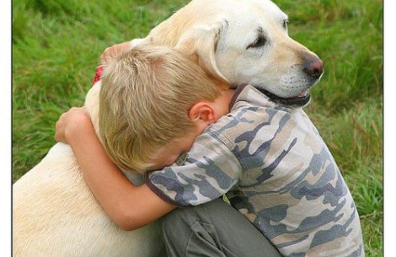El futuro de la lucha contra el maltrato animal, ¿la educación?