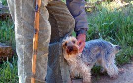 La RSCE lanza una campaña para pasear a los perros de las personas mayores durante la cuarentena