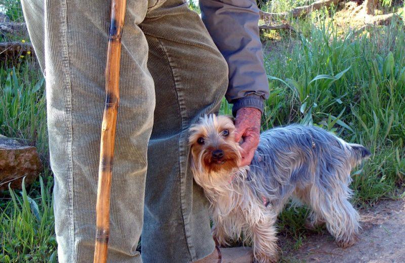 Elegir un perro para compañía de un anciano, cinco características recomendables