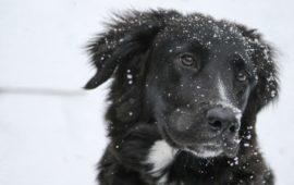 ¿El perro se resfría?