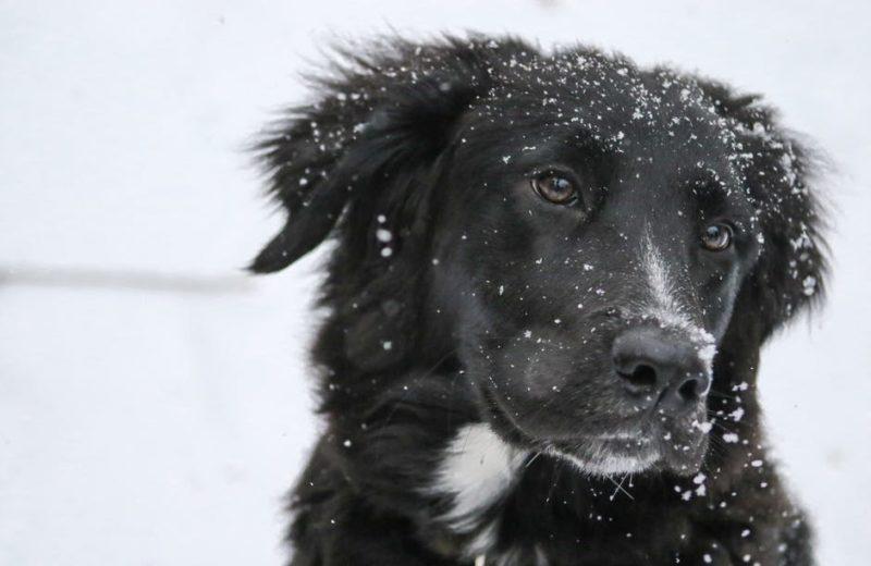 Perro constipado