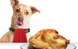 ¿Qué alimentos del súper son aptos para el perro?