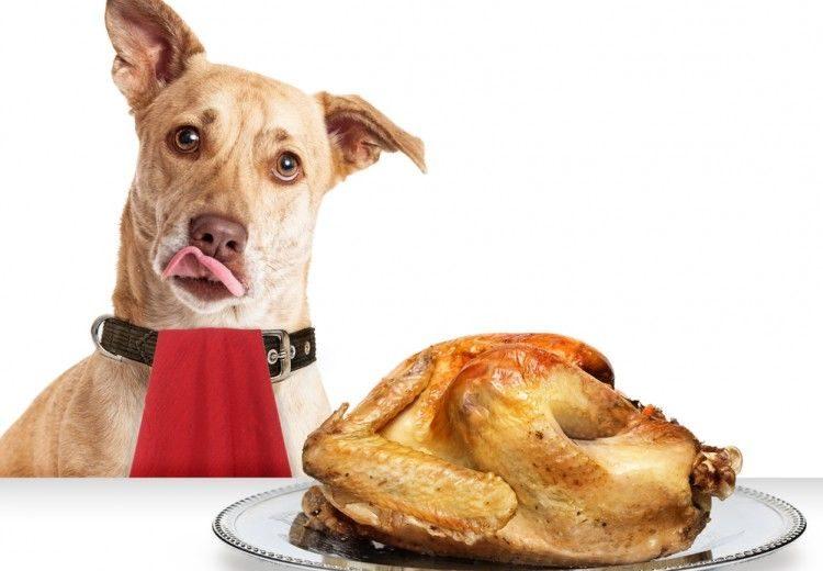 Alimentos de humanos para perros