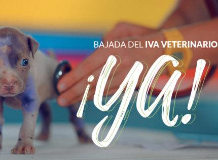 PACMA insta al Congreso a apoyar la reducción del IVA veterinario