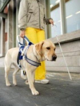 Nueva Ley de Perros de Asistencia en Andalucía